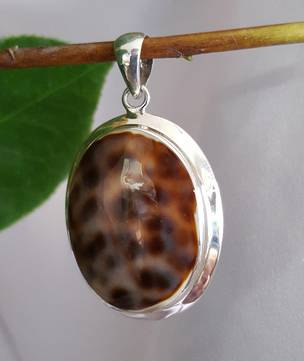 Oval Cowrie Shell Pendant - The Wonder Of Nature
